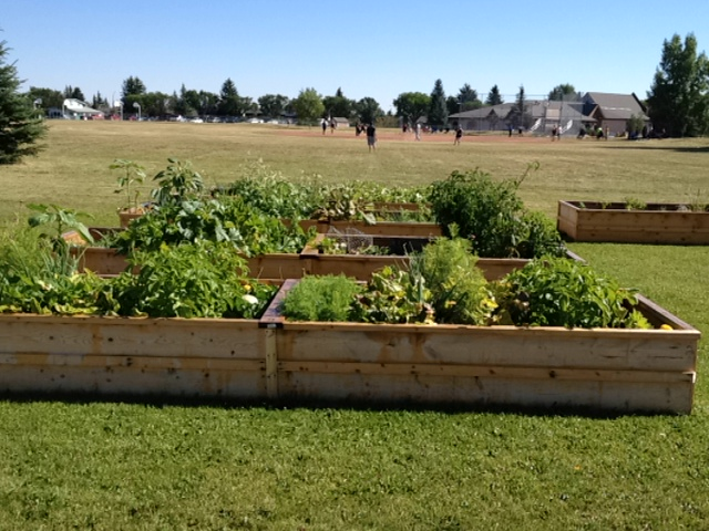 Deer Ridge Community Garden - 2013-71