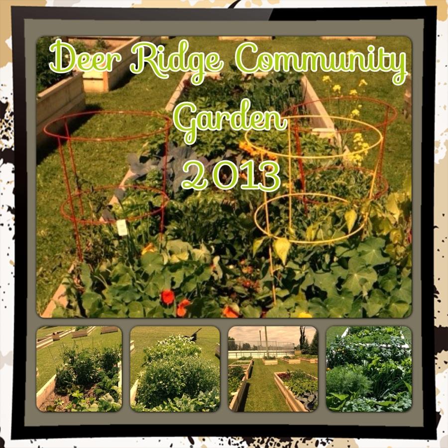 Deer Ridge Community Garden - 2013-75